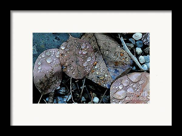 Wet Leaves Framed Print featuring the photograph Wet Leaves by Artist and Photographer Laura Wrede