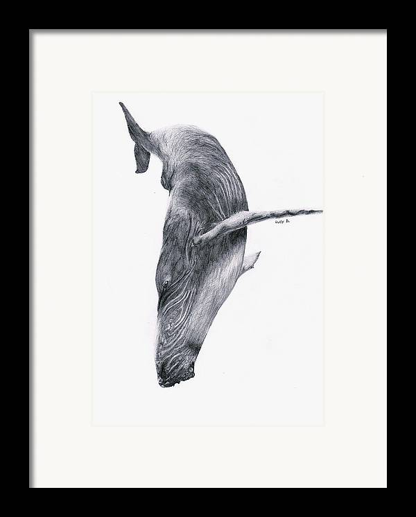 Whale Framed Print featuring the drawing Whale by Lucy D