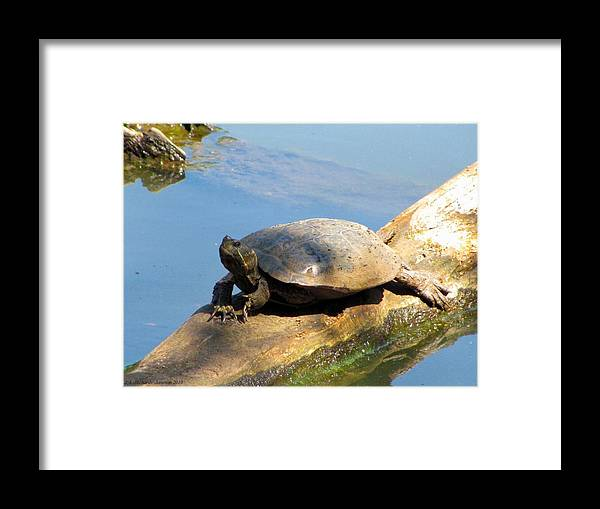 Turtle Framed Print featuring the photograph What A Life by Jennie Richards