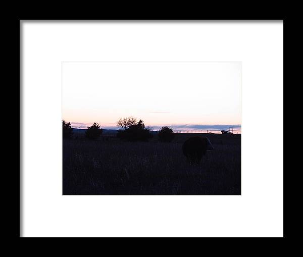 Cattle Framed Print featuring the photograph Whats Out There by Aaron Moore