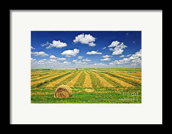 Agriculture Framed Print featuring the photograph Wheat Farm Field And Hay Bales At Harvest In Saskatchewan by Elena Elisseeva