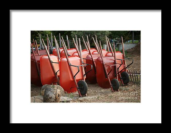 Wheelbarrow Framed Print featuring the photograph Wheelbarrows In Garden by Konstantin Sutyagin