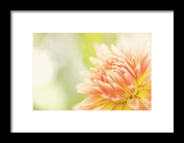Dahlia Framed Print featuring the photograph When Summer Dreams by Beve Brown-Clark Photography