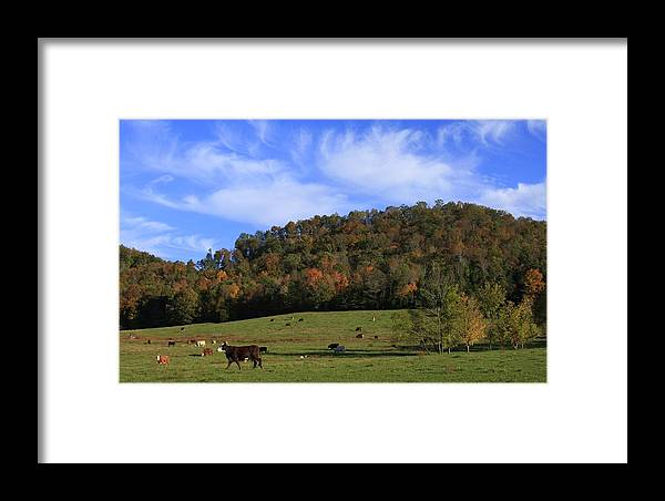 Cows Framed Print featuring the photograph When The Cows Come Home-alabama by Mountains to the Sea Photo