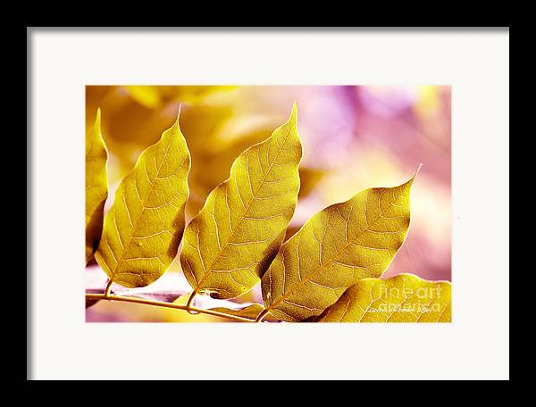 Gold Leaves Framed Print featuring the photograph When The Leaves Turn Gold by Artist and Photographer Laura Wrede