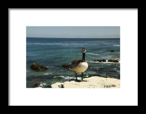 Goose Framed Print featuring the photograph Where Do I Go From Here by Donna Blackhall