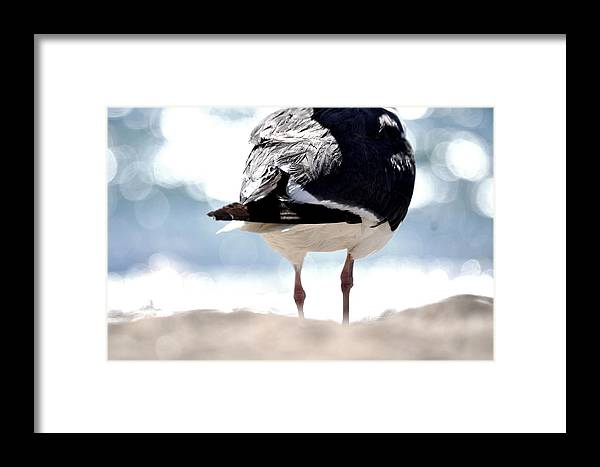 Bird Framed Print featuring the photograph Where Is My Face by Nicky Dou