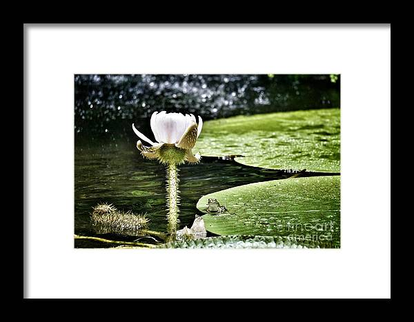 Flowers Framed Print featuring the photograph Where Is The Frog by Tami Martin