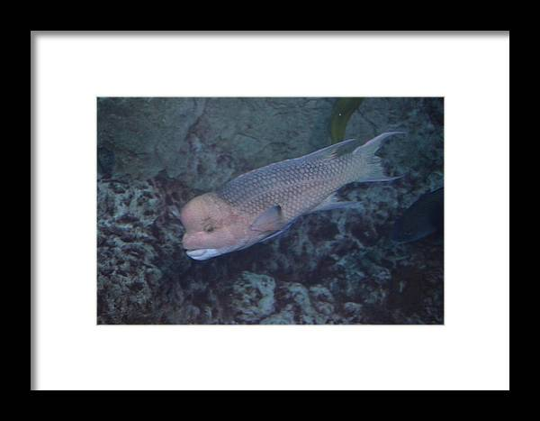 Fish Framed Print featuring the photograph Where's Nemo by Chandra Wesson