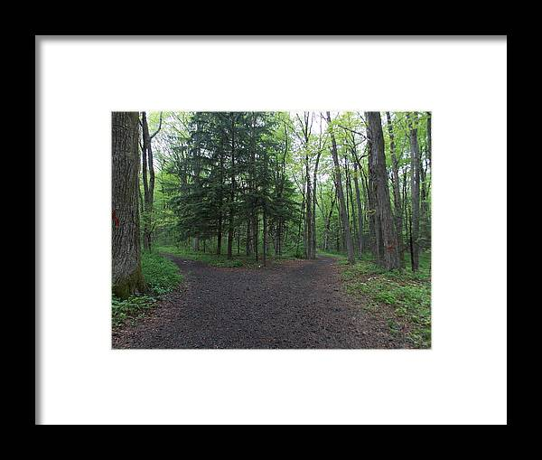 Forest Framed Print featuring the photograph Which Way by Catherine Gagne