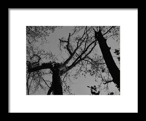 Wall Art Photographs Framed Print featuring the photograph Silhouette Trees by Barb Dalton