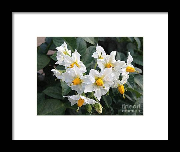 Blossoms Framed Print featuring the photograph Garden Blossoms White And Yellow Garden Blossoms by Conni Schaftenaar