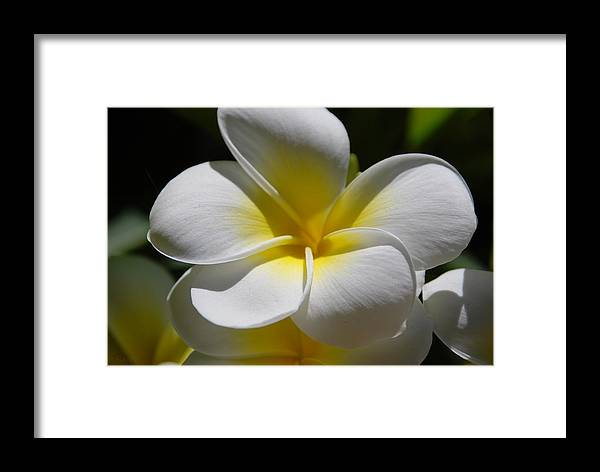Nature Framed Print featuring the photograph White Bloom by Rob Hans