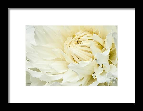 Walter Hardisty Framed Print featuring the photograph White Dahlia by Joe Mamer