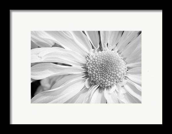 3scape Framed Print featuring the photograph White Daisy by Adam Romanowicz