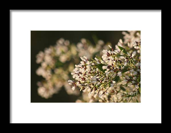 White Framed Print featuring the photograph White Flowers by Nadine Rippelmeyer