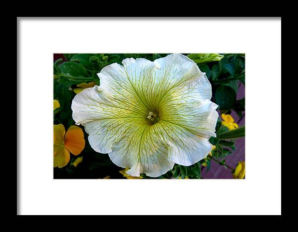 Colorado Framed Print featuring the photograph White Garden Petunia by Marilyn Burton