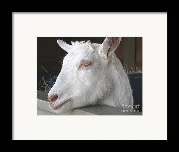 Goat Framed Print featuring the relief White Goat by Ann Horn