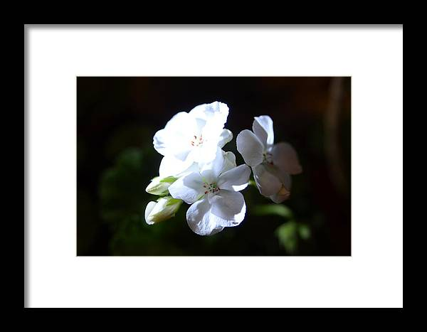 Landscape Framed Print featuring the photograph White Heart by Rami Khoury