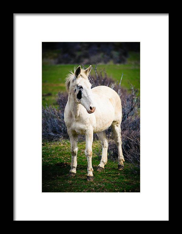 Equine Framed Print featuring the photograph White Horse by Steve G Bisig