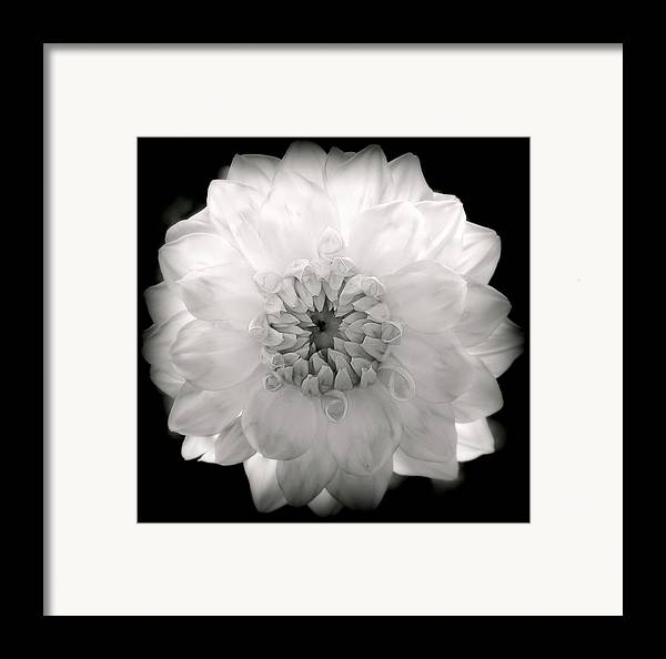 White Flowers Framed Print featuring the photograph White Magic by Karen Wiles