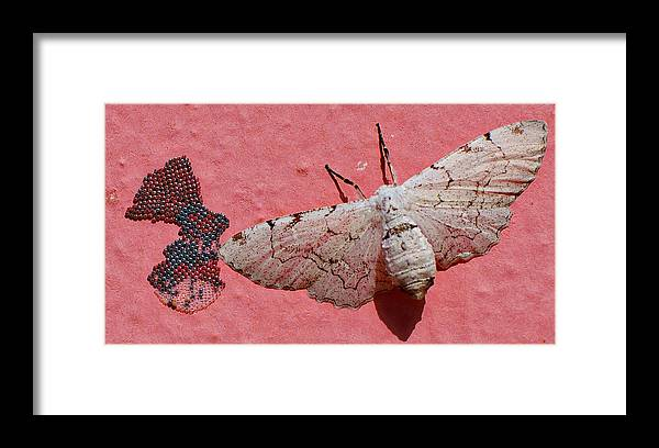 Moth Framed Print featuring the photograph White Moth And Eggs by Camilla Fuchs