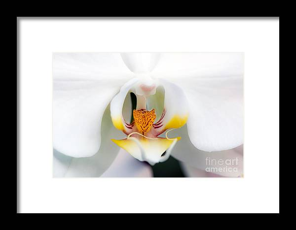 White Framed Print featuring the photograph White Orchid by Eddie Yerkish