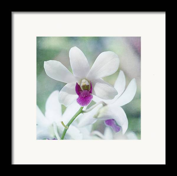 Orchid Framed Print featuring the photograph White Orchid by Kim Hojnacki