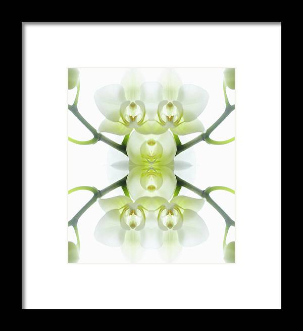 Tranquility Framed Print featuring the photograph White Orchid With Stems by Silvia Otte