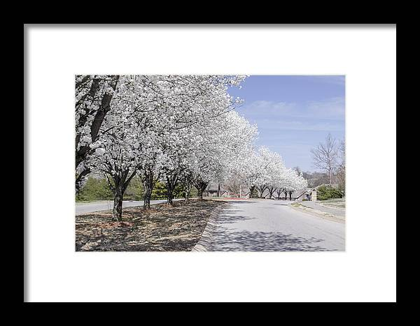 Trees Framed Print featuring the photograph White Pear Trees Casting Shadows by Linda A Waterhouse