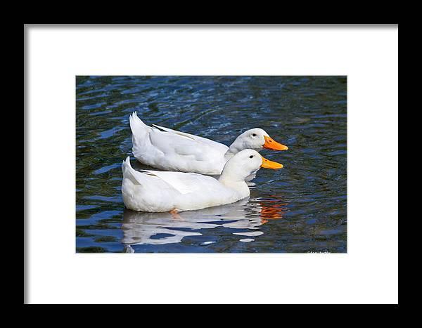 Animals Framed Print featuring the photograph White Pekin Ducks #2 by Ann Murphy