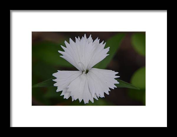 White Framed Print featuring the photograph White Points by Jeri lyn Chevalier