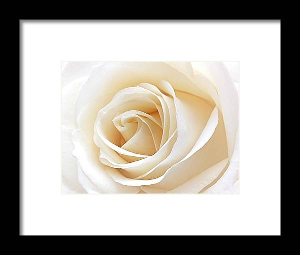 Rose Framed Print featuring the photograph White Rose Heart by Gill Billington