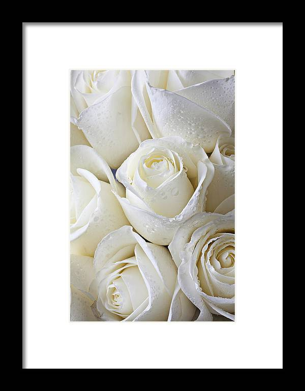 Rose White Roses Framed Print featuring the photograph White Roses by Garry Gay