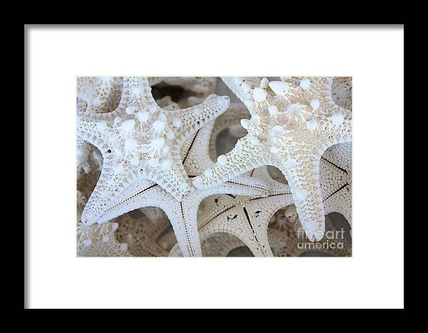 White Framed Print featuring the photograph White Starfish by Carol Groenen