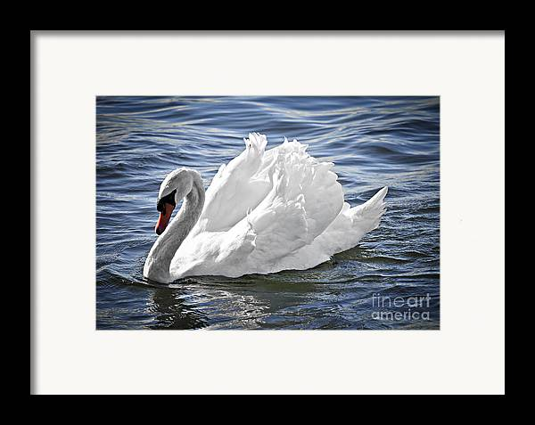 Swan Framed Print featuring the photograph White Swan On Water by Elena Elisseeva