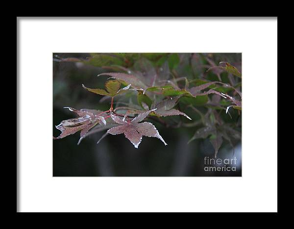 Frost Framed Print featuring the photograph White Tips by Yumi Johnson