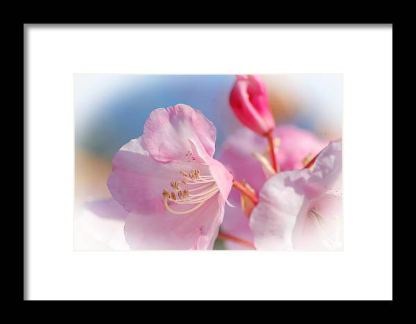 Flowers Framed Print featuring the photograph White Vagnette by Yuri Levchenko