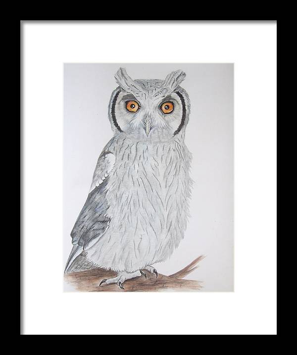 Owl Framed Print featuring the painting Whitefaced Owl by Tracey Beer