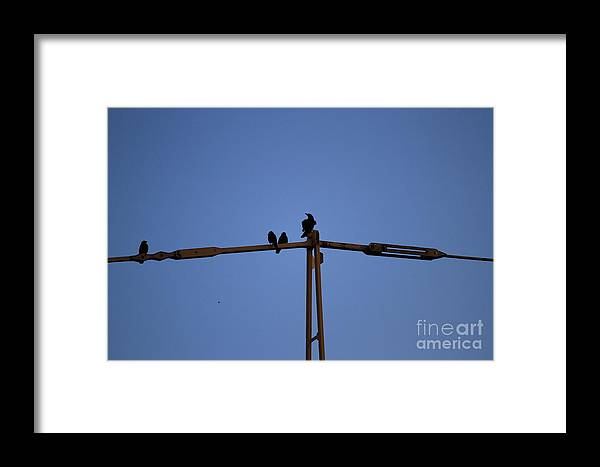 Crane Framed Print featuring the photograph Who Is Here The Boss by Four Hands Art