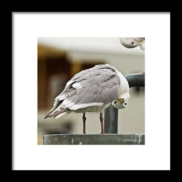 Gulls Framed Print featuring the photograph Who You Lookin At by Terry Cotton