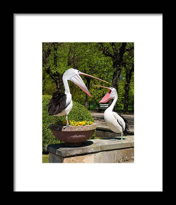 Birds Framed Print featuring the photograph Why Are You Yelling On Me by Iryna Soltyska