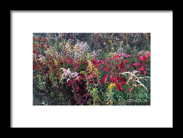 Wild Flowers Framed Print featuring the photograph Wild As Can Be by Monika A Leon