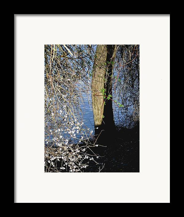 Cherry Framed Print featuring the photograph Wild Cherry Tree On The Sacramento River by Pamela Patch