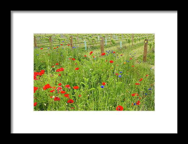 Scenics Framed Print featuring the photograph Wild Flowers Along The Edge Of A by Lazingbee