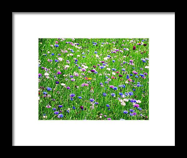 Photograph Framed Print featuring the photograph Wild Flowers by Cristina Stefan
