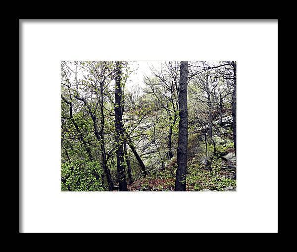 Trees Framed Print featuring the photograph Wild Manhattan by Sarah Loft