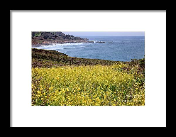 Big Sur Framed Print featuring the photograph Wild Mustard At The Shore by Stuart Gordon