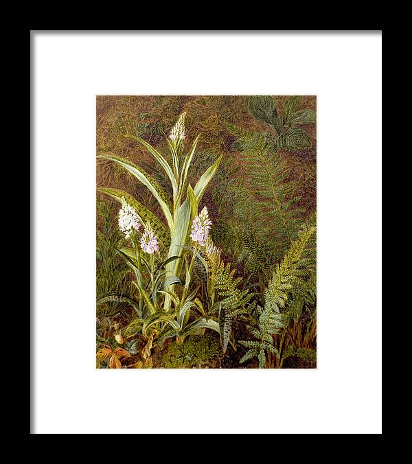 Orchid Framed Print featuring the painting Wild Orchids by Marian Emma Chase