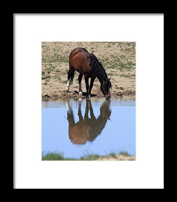 Wild Framed Print featuring the photograph Wild Reflection by Gene Praag